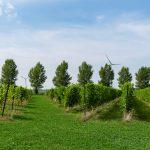 De Wilde Wijngaard Lelystad