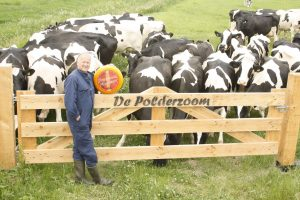 Ard van Wees van Polderzoom om bij koeien