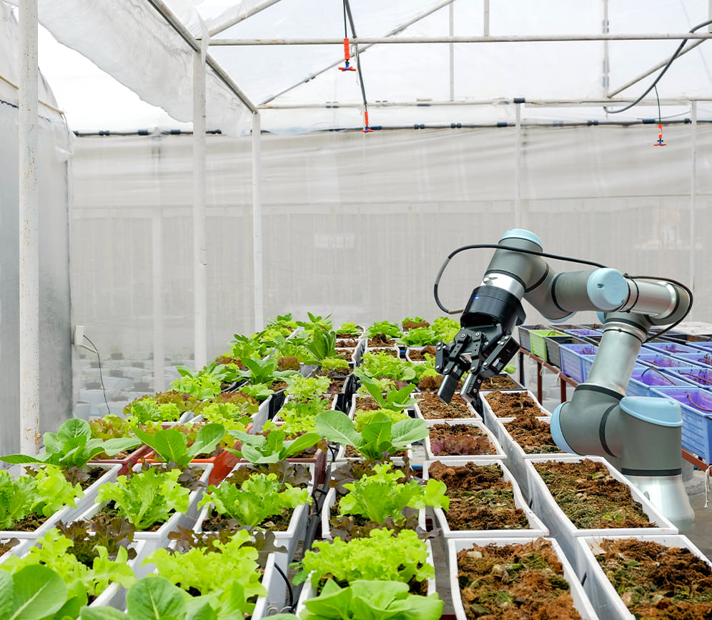 Robotarm plaatst plantjes