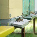 Bijen bij bijenkast