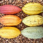 zes cacaobonen